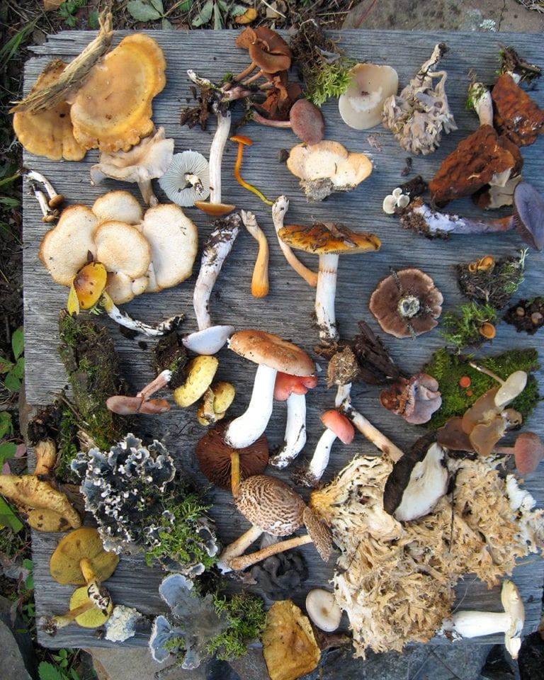 Nature's larder? No thanks…