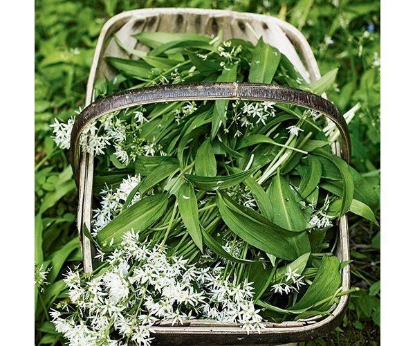 wild-garlic-with-flowers