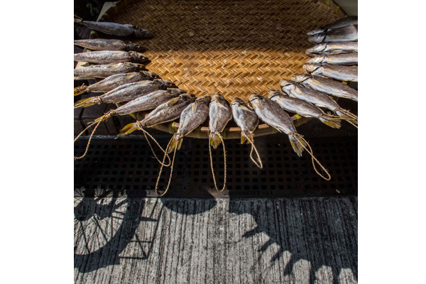 Partridges-Food-for-Sale--Sally-Stone-(UK)---Sun,-Shadows-and-Fish
