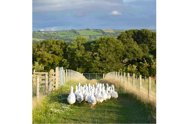 Ten-Acre-Food-in-the-Field--Jake-Eastham-(UK)---Gaggle