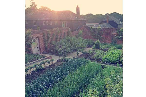 The-pig-kitchen-garden