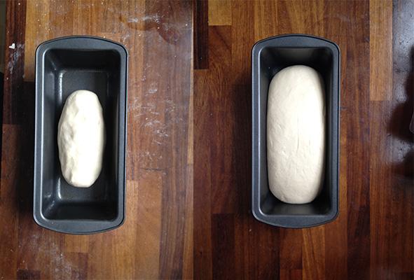 rising-dough