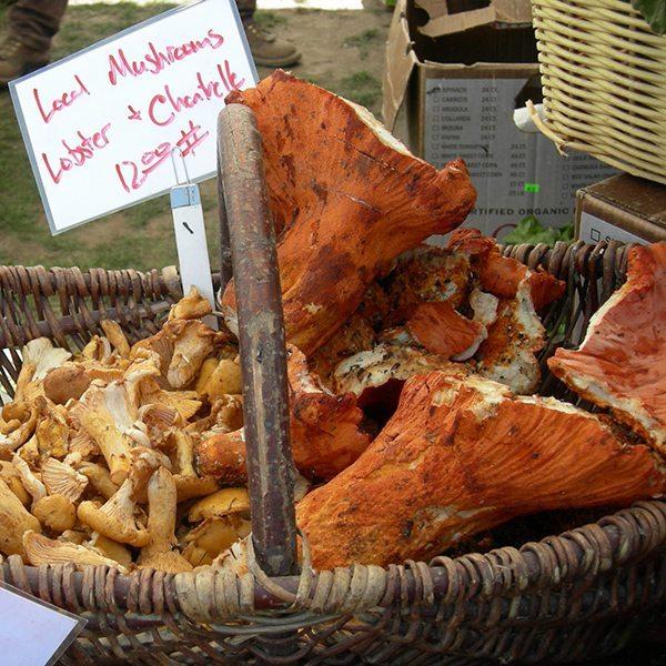lobster-mushroom