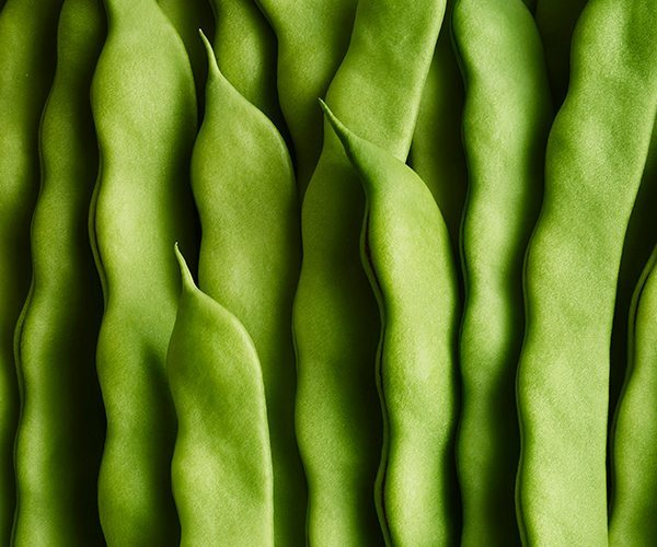 Crop_Andy-Grimshaw_Green-Beans_Hi-Res
