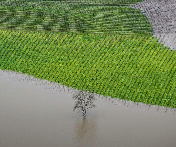 Errazuriz_Places_George-Rose_Vineyard-Flooding_Hi-Res