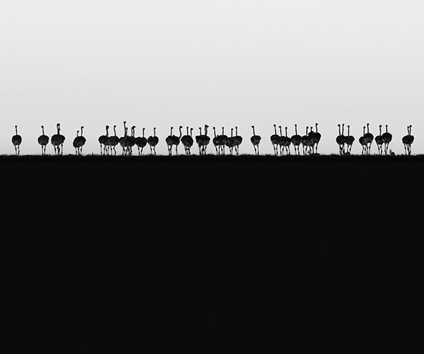Fujifilm_Philip-Field_Ostrich-Horizon_Hi-Res