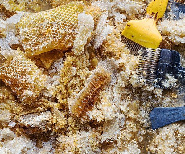 Student_Becci-Hutchings_Honeycomb-and-Wax_Hi-Res