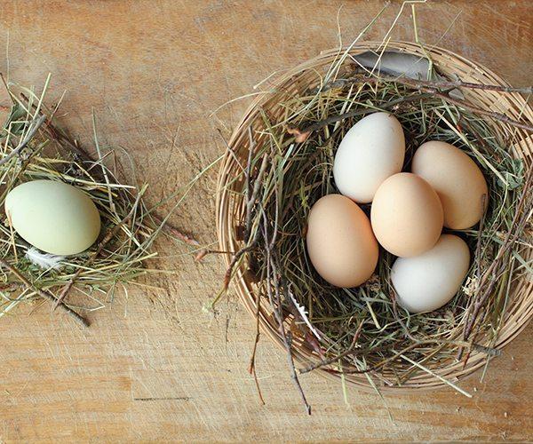 Young-(11---14)_Stefan_Dedu_Fresh_Chicken_Eggs_Hi-Res