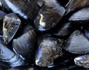 Make the most of… mussels