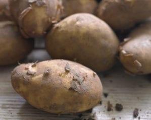 The ultimate potato guide