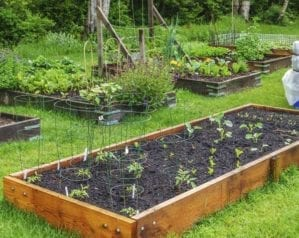 How to make a vegetable bed