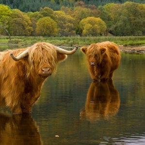 Scottish producers