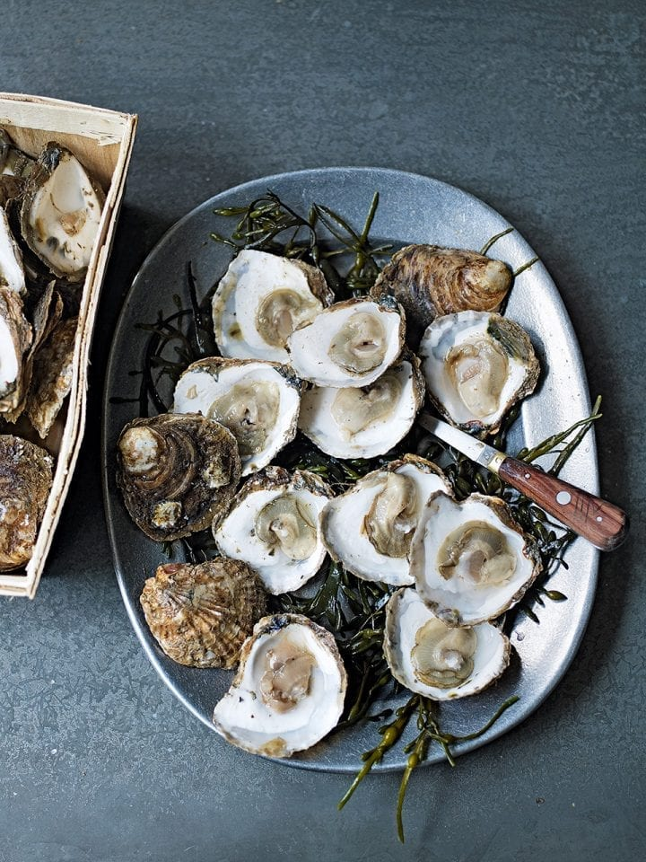 How to shuck oysters video