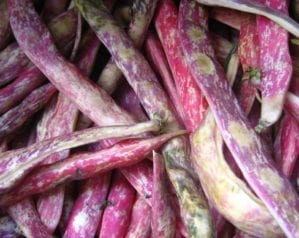 How to grow borlotti beans
