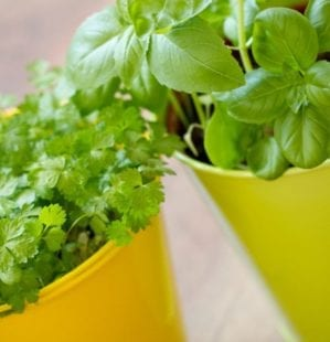 How to plant edibles in pots