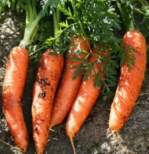 A simple planting guide: when to plant vegetables