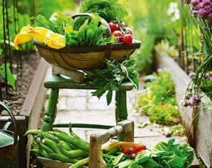 5 reasons to grow your own fruit and veg