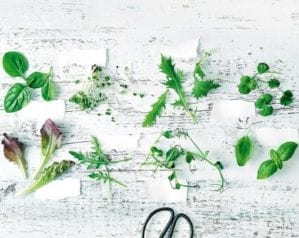How to grow your own salad leaves
