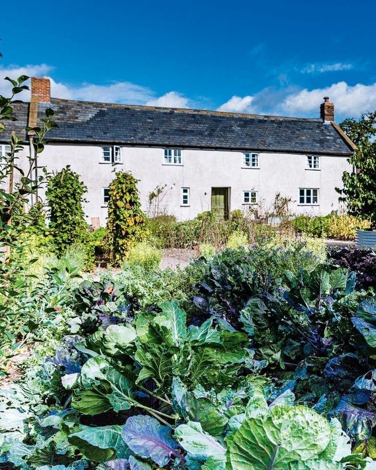 River Cottage Kitchen: River Cottage's Steven Lamb Reveals What Happens Behind
