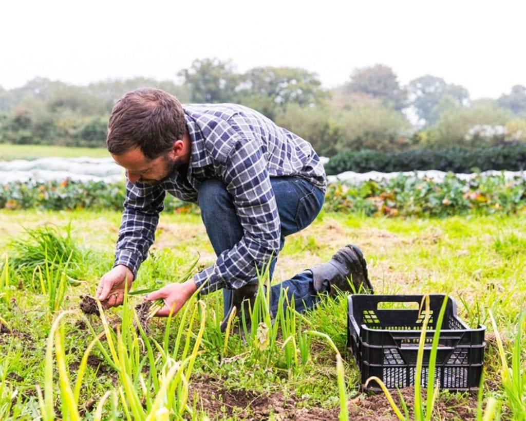 Man picking spring onions