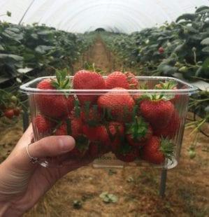 Behind-the-scenes at Hugh Lowe Farms: what makes Jubilee strawberries so sweet