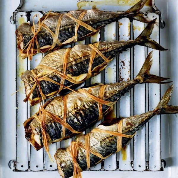 Goan mackerel