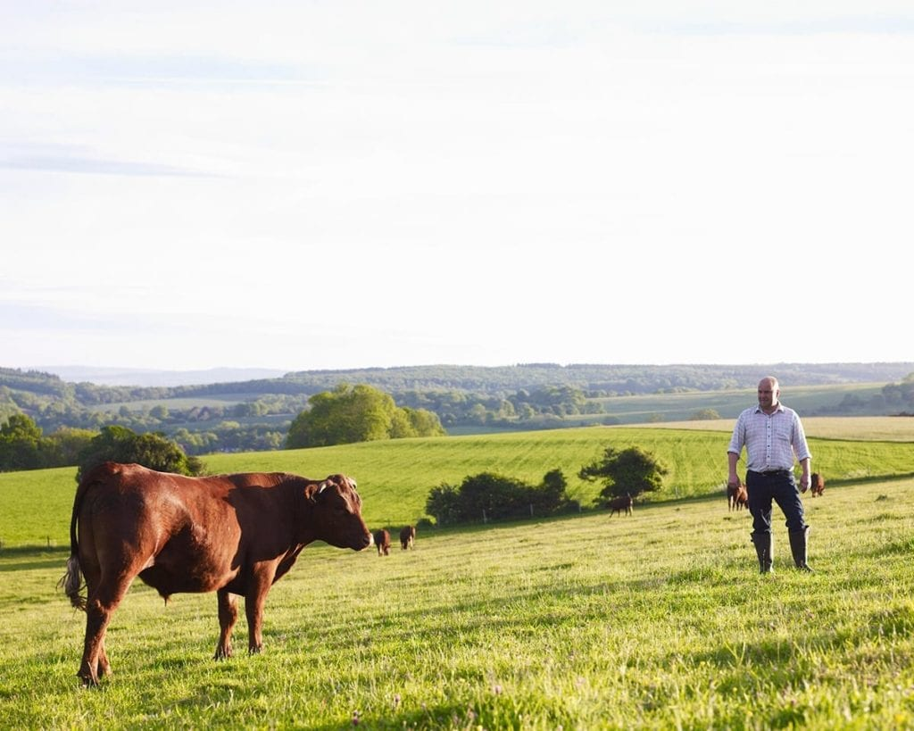 Image of cow and farmer in field