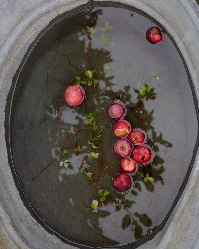 Image of small apples bobbing in water