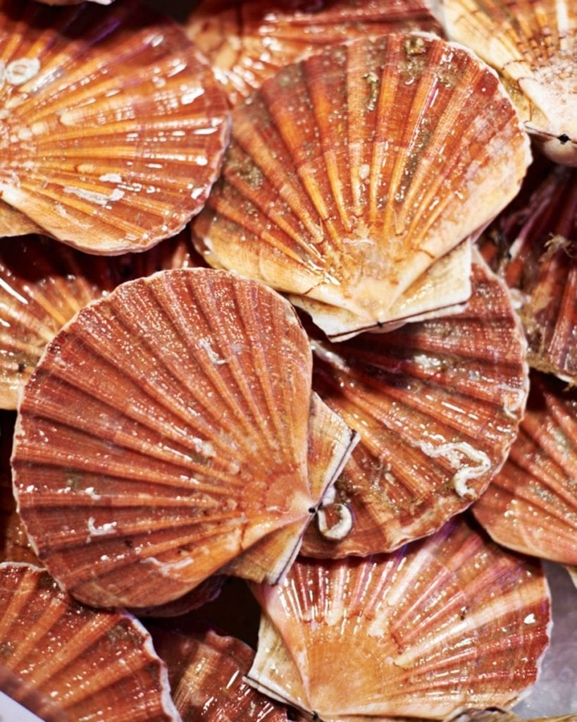 Image of scallops in shells