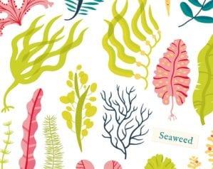 Should we all be eating seaweed?