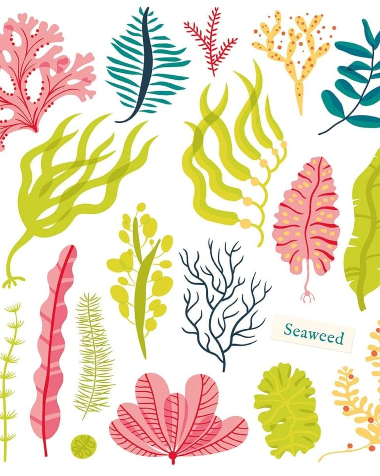 Should we all be eating seaweed?