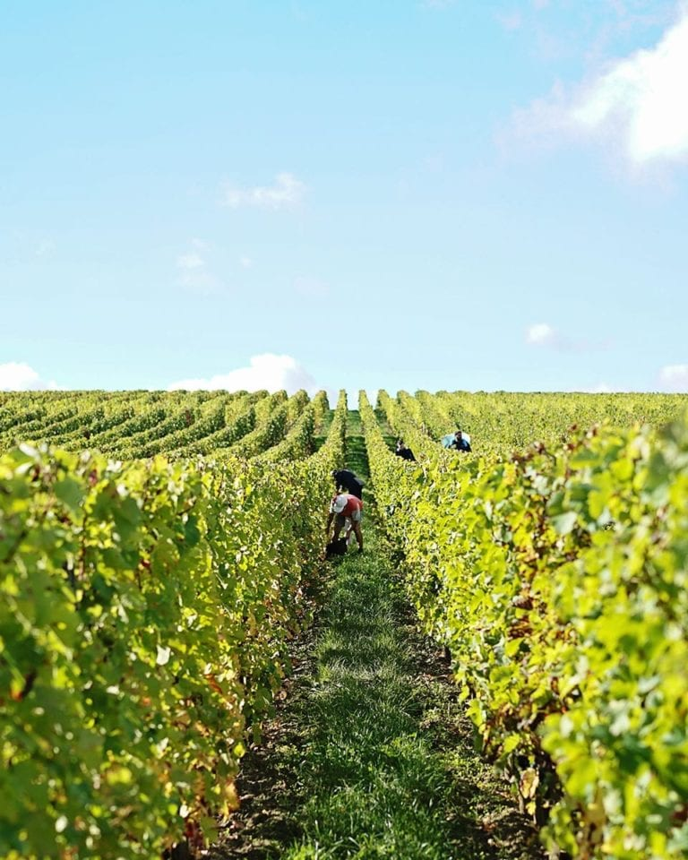 Listen now: A French revolution in Bordeaux wines