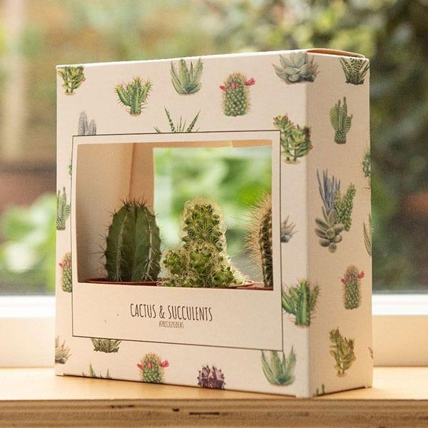 Waitrose succulent