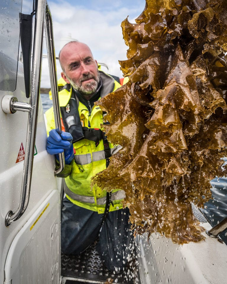 Food job diaries: A day in the life of a sugar kelp diver