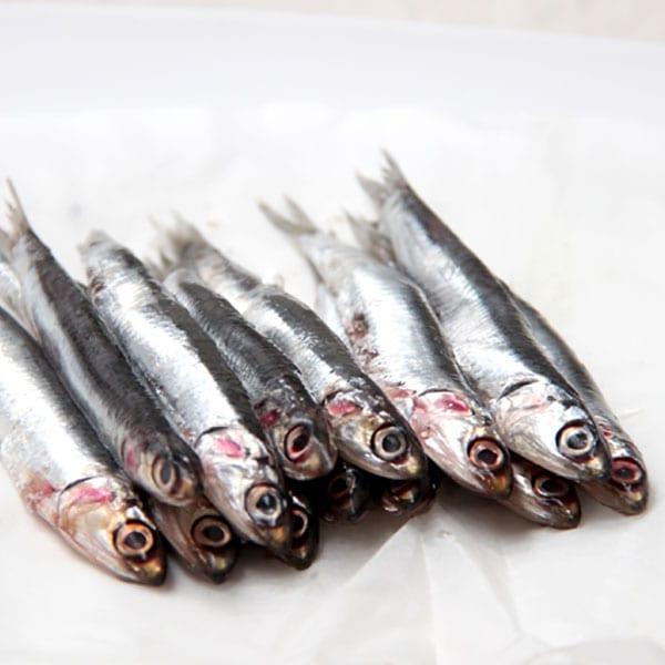 fish society