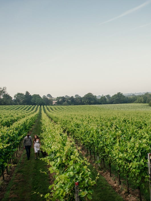 The best vineyards in the UK you can visit