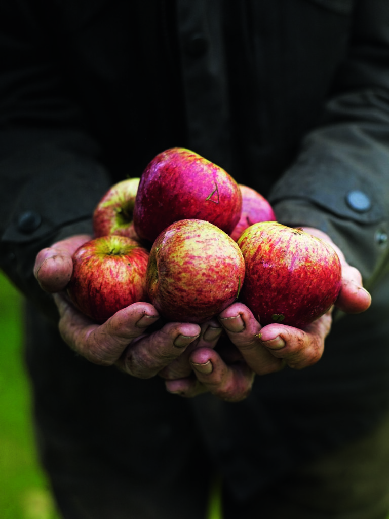 The UK's best apple orchards to visit this autumn